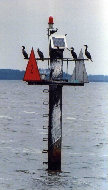 Cormorants on a channel marker. Picture