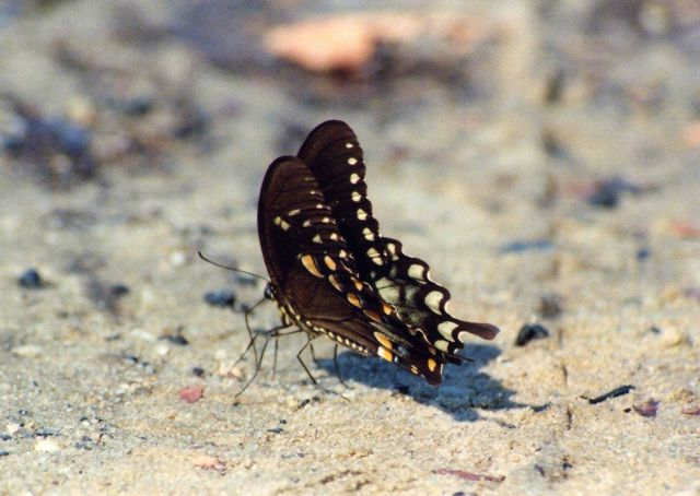 Butterfly on the beach. Picture