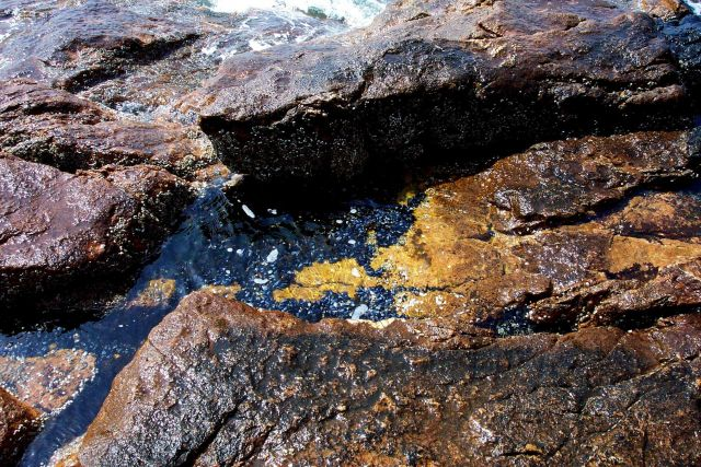 Tide pool with mussels below Bass Harbor Head Lighthouse. Picture