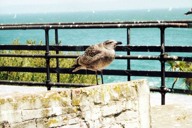 A jailbird at Alcatraz Island. Picture