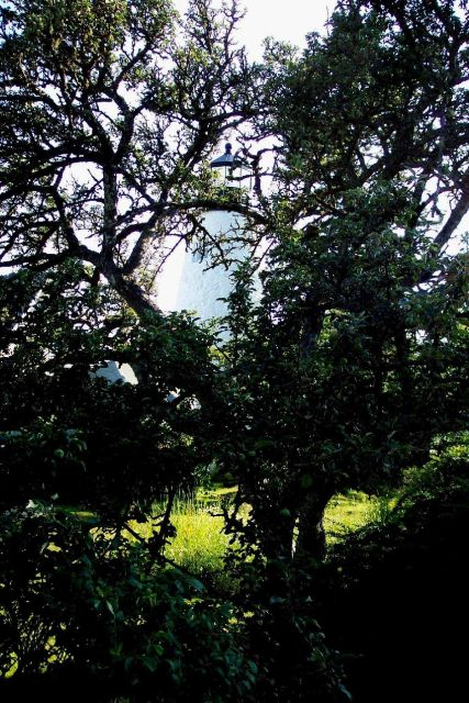 Dices Head Lighthouse seen through the trees. Picture