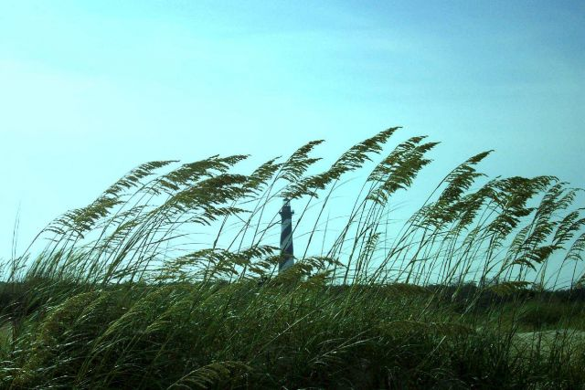 Cape Hatteras Lighthouse seen through the sea oats. Picture