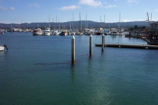 The Monterey yacht harbor. Picture