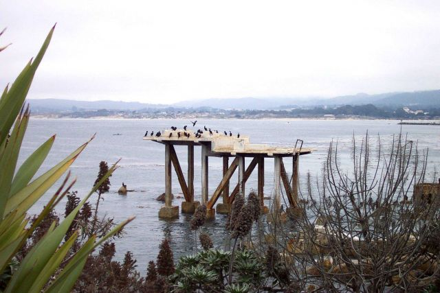 Brandt's cormorants - Phalacrocorax penicillatus - making use of an abandoned structure along Cannery Row. Picture