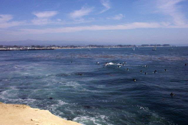 Surfers, sailboats, and the Santa Cruz wharf as seen from Lighthouse Point Picture