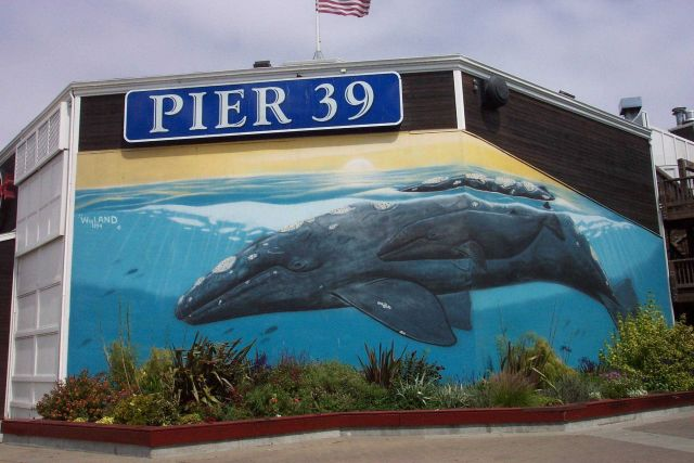 A humpback whale mural of mother and calf at Pier 39, near Fisherman's Wharf. Picture
