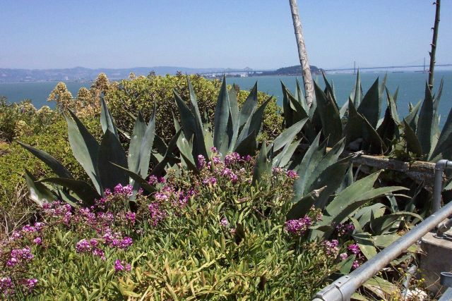 A garden near the warden's home on Alcatraz Island. Picture