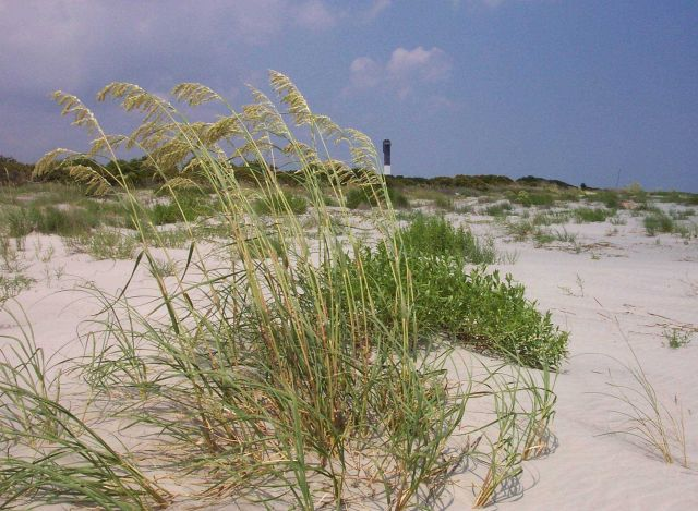 Sullivans Island Lighthouse and sea oats. Picture
