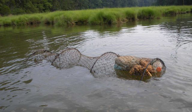 Fyke net set for turtles Picture