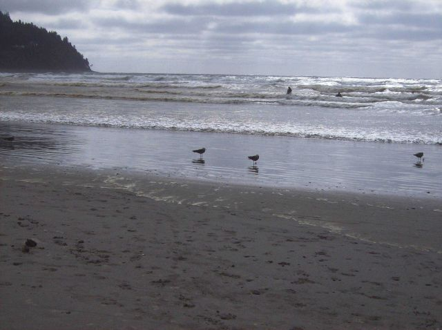 Seagulls, surf, and impervious to cold water humans on a northern Oregon beach. Picture