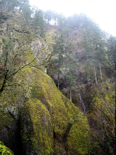 Ribbon-like waterfalls cascading down the sides of the Columbia River gorge Picture