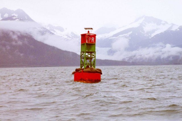Sea lions find a resting place on a buoy in the labyrinth of Southeast Alaska waterways. Picture