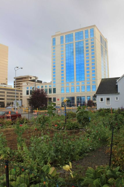 The Alaska Marriott with a private garden of what appears to be poppies. Picture