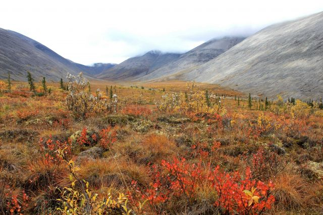 Looking into Windy Pass Valley along the Dempster Highway Picture