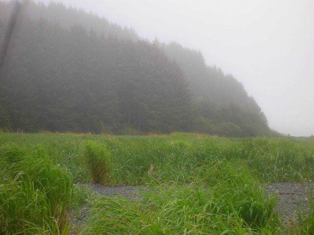 Wetlands in a stream valley adjacent to the sea. Picture