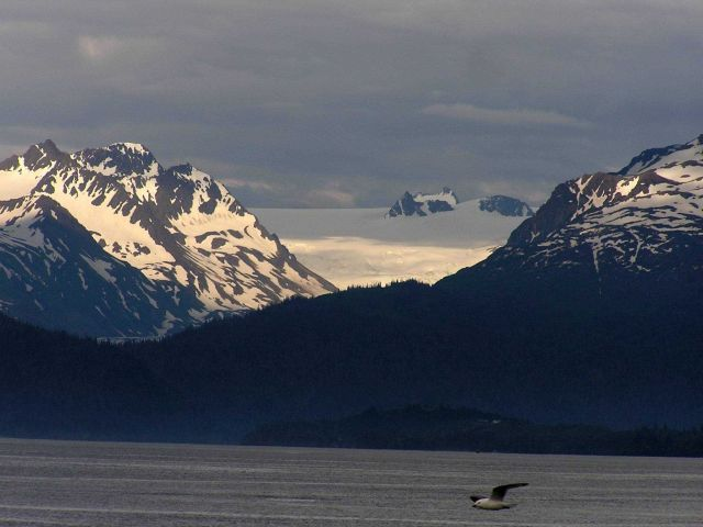 Mountains, snow, and a lone seagull. Picture