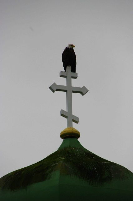 Eagle perched atop the cross crowning the Russian Orthodox Church at Dutch Harbor. Picture
