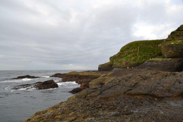 Shore birds on the rocks near the coastline. Picture