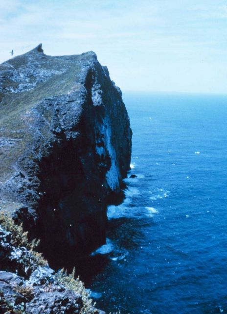 The cliffs with an albatross passing by. Picture