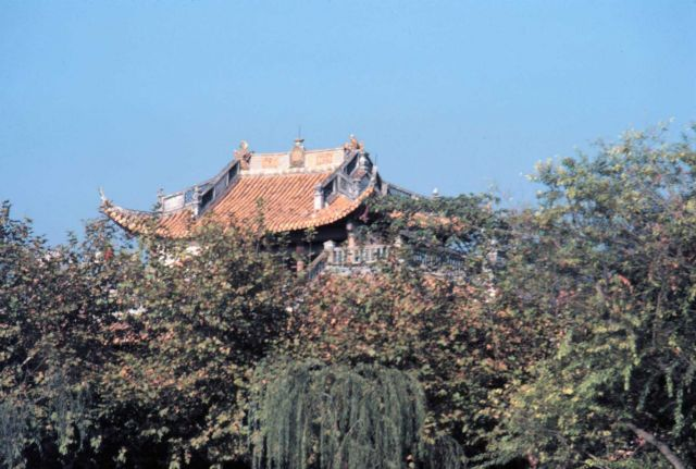 Temple roof seen over foliage Picture