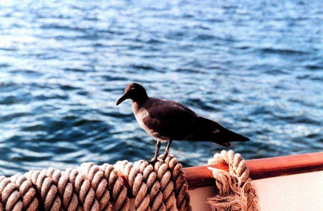 A bird in Fernandina Island, Galapagos Islands Picture