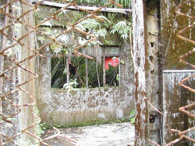 Overgrown and deteriorating prison walls at Isla Gorgona. Picture