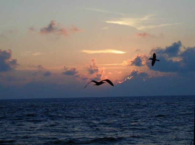Sunset and birds at Clipperton Island. Picture