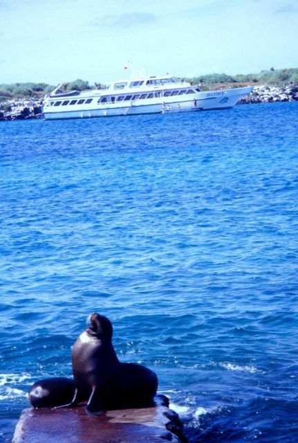 Cruise ship DELFIN II in the Galapagos Picture