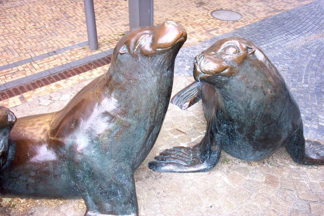 Sculpture of harbor seals. Picture