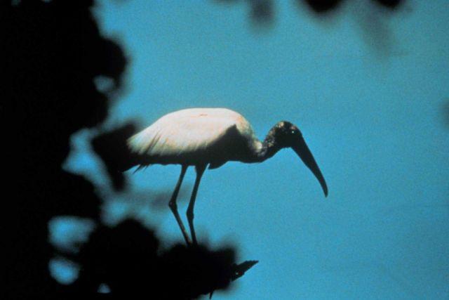 ACE Basin National Estuarine Research Reserve Picture