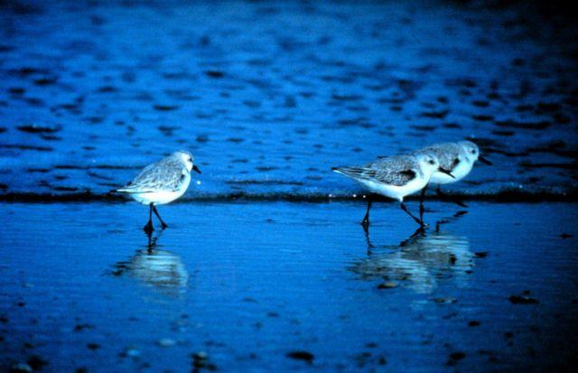 North Carolina National Estuarine Research Reserve Picture