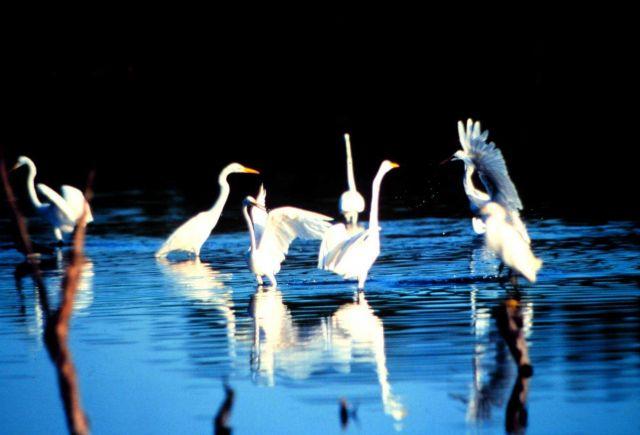 Jobos Bay National Estuarine Research Reserve Picture