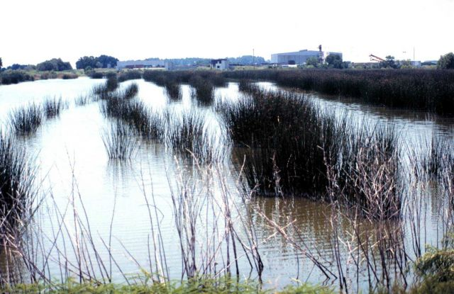 Grand Bay National Estuarine Research Reserve Picture
