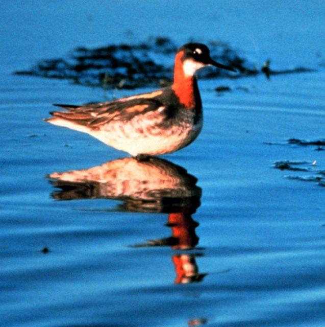 Kachemak Bay National Estuarine Research Reserve Picture