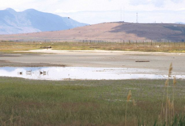 Water-bird habitat. Picture