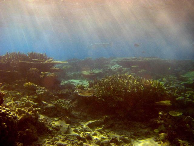 Sunlight filtering down through water onto the reef with large barracuda swimming in distance. Picture