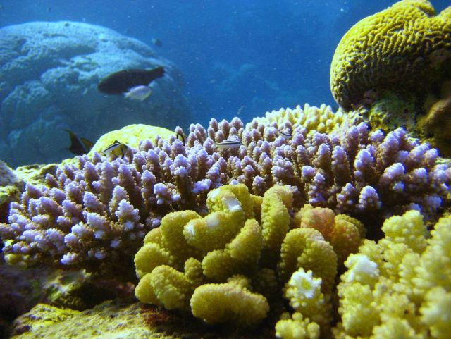 Reef scene with fish and coral Picture