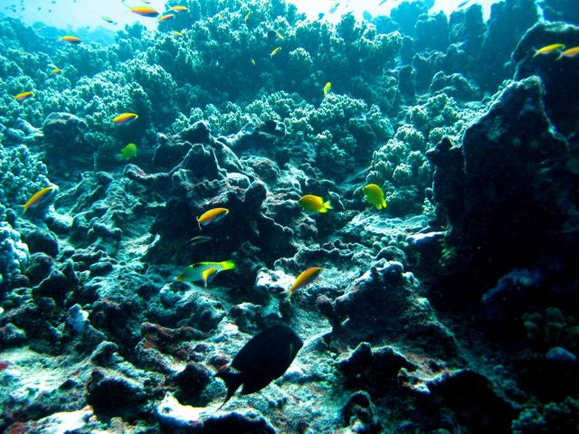 Reef scene with anthias and damselfish Picture