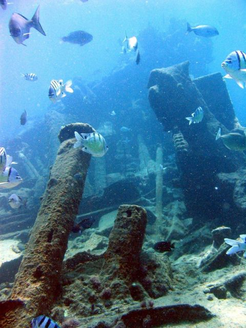Hawaiian sergeant major fish using ship wreck on Pearl and Hermes Reef as habitat. Picture