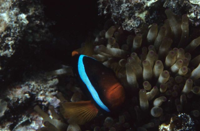 One Tree Reef Picture