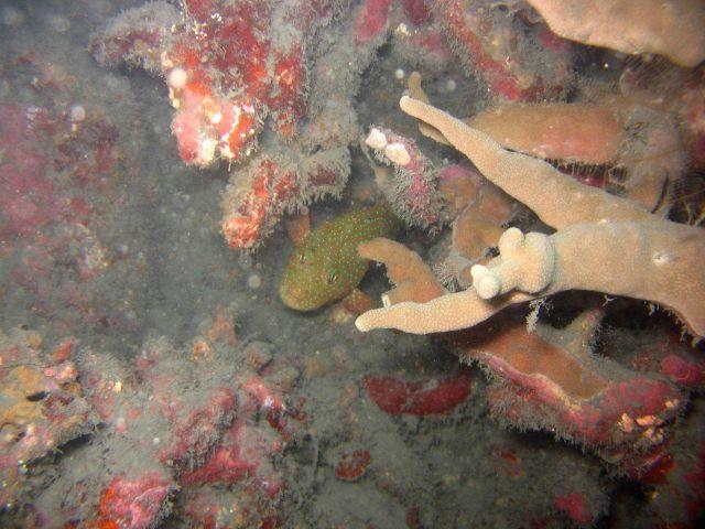 Grouper Picture