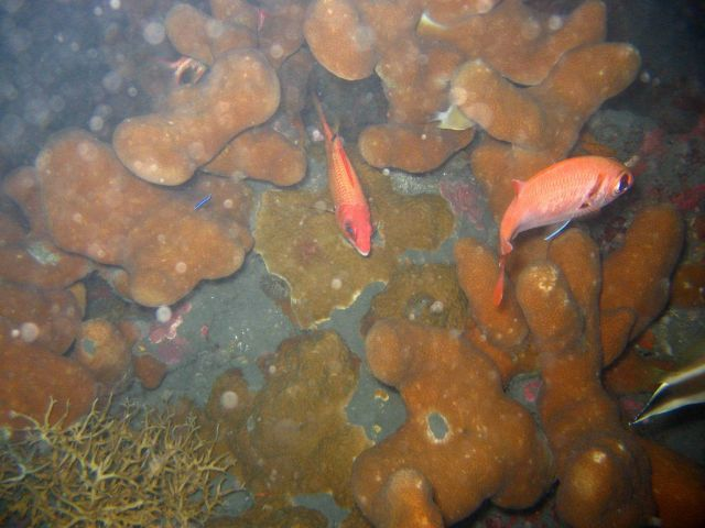 A squirrelfish and a soldierfish. Picture