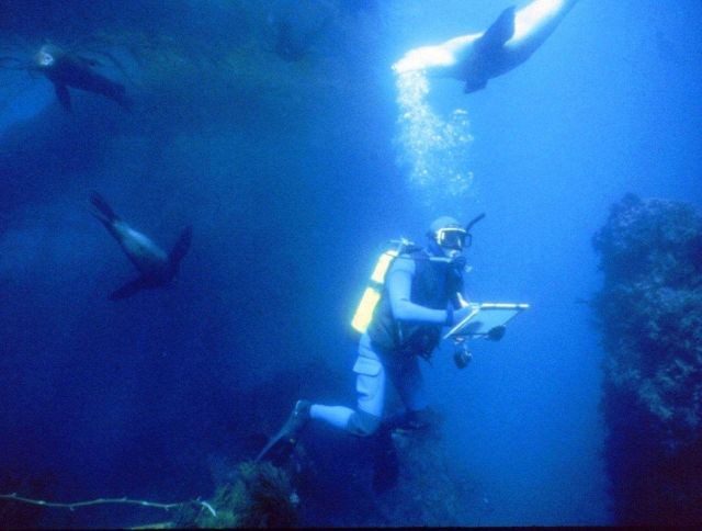 Marine archaeologist surrounded by sea lions while studying the wreck of the S.S Picture