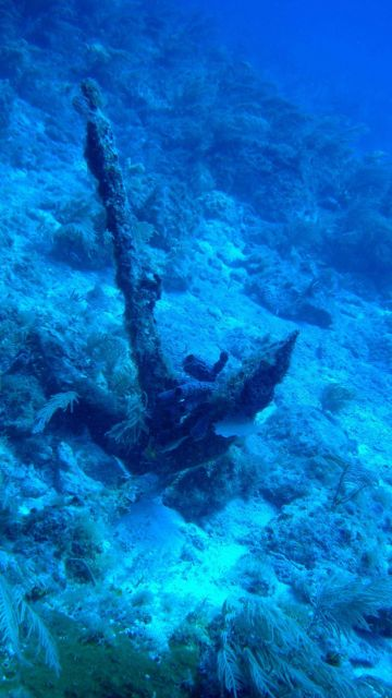 Either an old anchor covered with algae, sponges, and corals or a very good dead coral imitating an anchor. Picture
