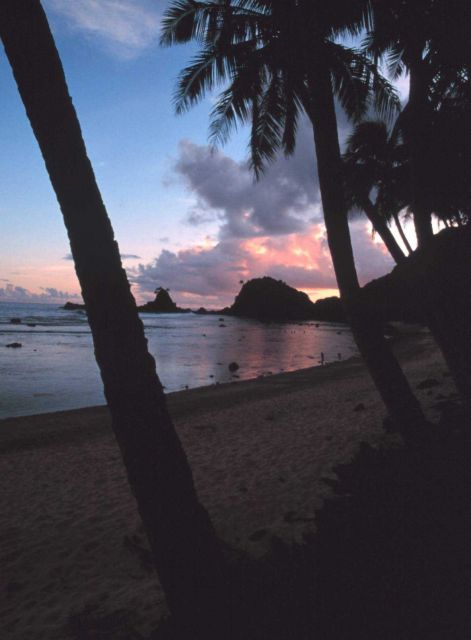 Sunset through the palm trees along the shores of American Samoa Picture