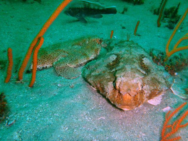 Fish  underwater - Gray's Reef Picture