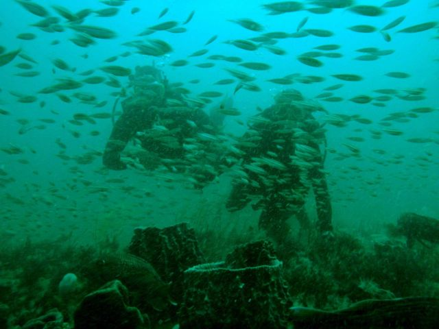 Scuba divers and fishes - Gray's Reef Picture