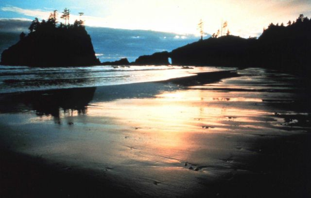 Sunset along an Olympic Coast beach Picture