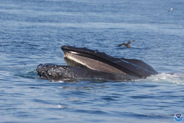 Sea Bird and Humpback whale Picture
