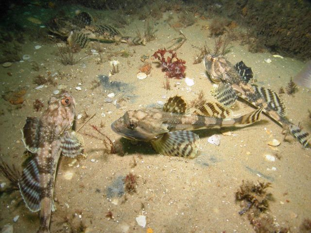 Is it a Lionfish? Picture